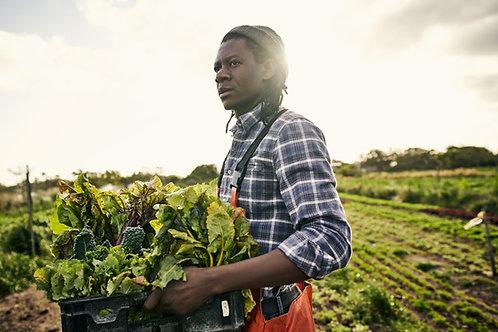 William's Lettuce