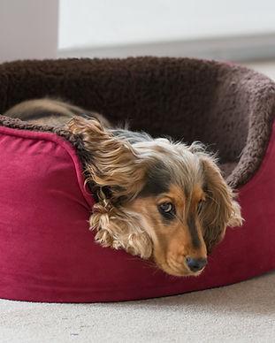 Ein Welpe im Bett