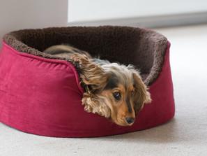 Mentale Aromatherapie beim Hund