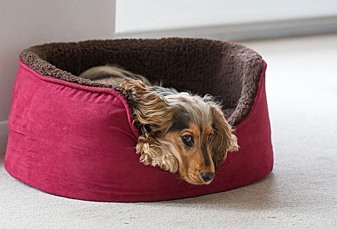Um filhote de cachorro na cama