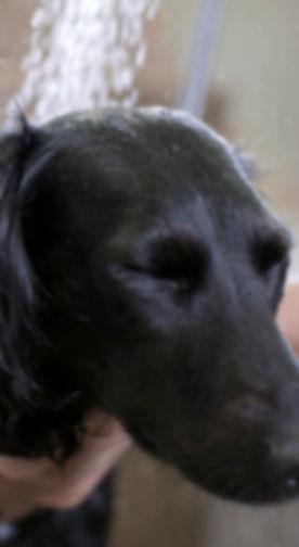 Paralimni Dog Pound Helping Dogs