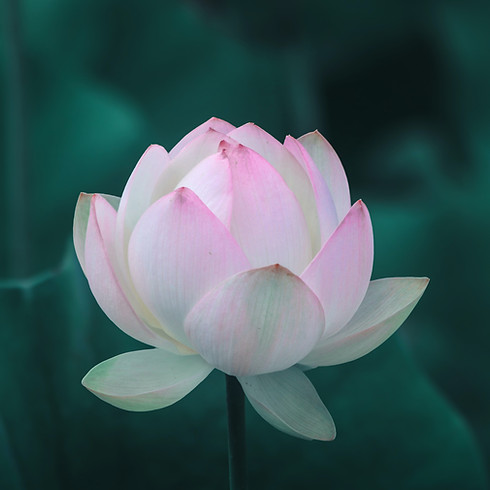 Meditation: Cultivating Openness through the Working of the Heart