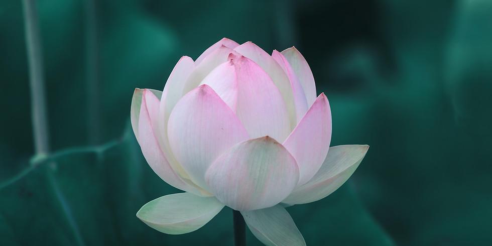 VIRTUAL 8-Week Mindful Self-Compassion Workshop - Starting September 14th, 2021