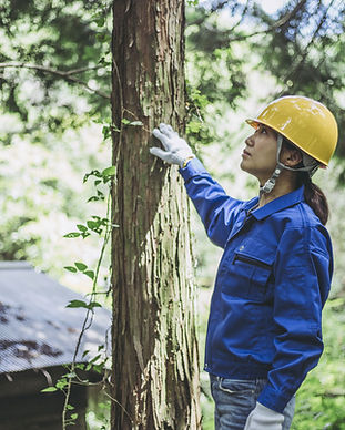 Field Service Management in forestry