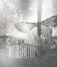 蝶のコラージュ