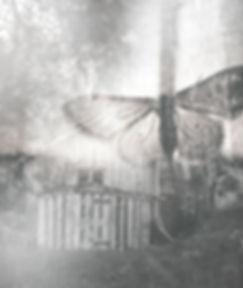 Collage de mariposa