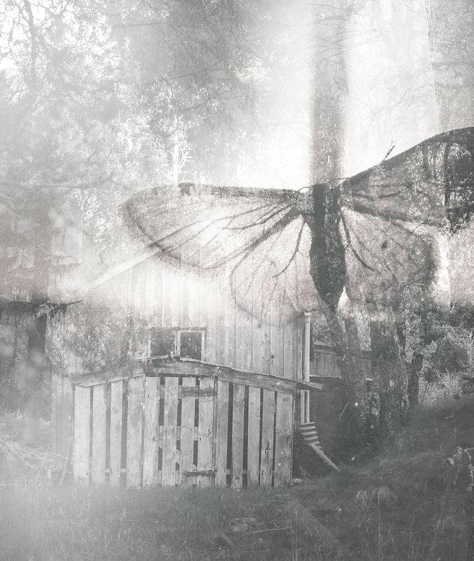 Colagem da borboleta