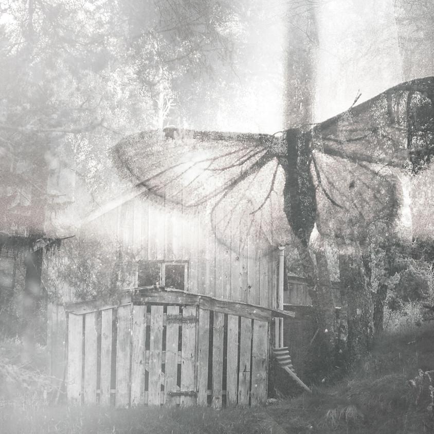 The Butterfly's Burden, Mahmoud Darwish