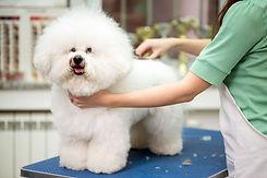 Escova de um animal de estimação