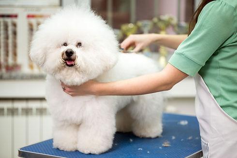 Парикмахер для домашних животных
