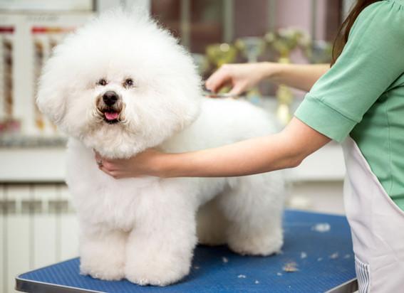 pet-groomer