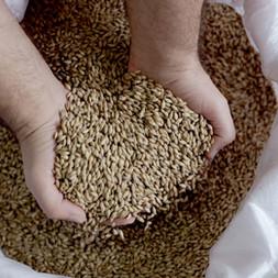Grains: health dynamo or demon?