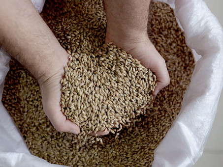 Tahıl ve Tahıl Ürünlerinin İnsan Beslenmesi ve Sağlık Açısından Önemi