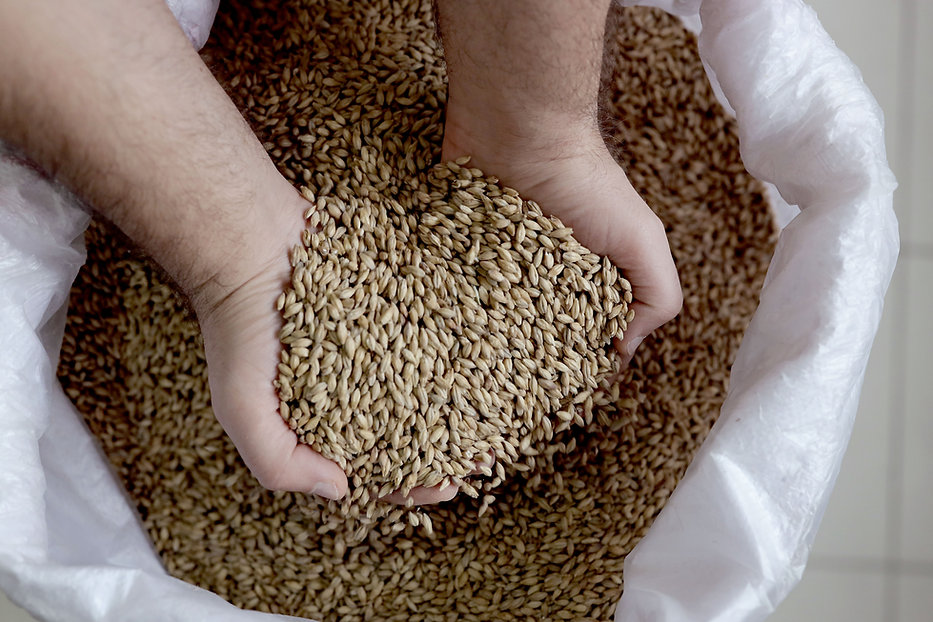 Barley Grains