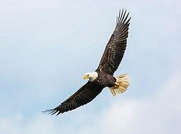 Gadzee Eagle