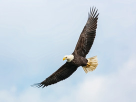 Eagles Be Released!