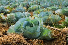 5. 葉野菜をベースにするケトジェニックダイエット