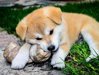 Considering buying a puppy or adopting a new rescue puppy/ dog? Vet check it first...