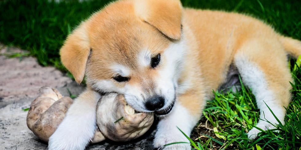 Puppy Preschool - 4 Week Program w/Kristine