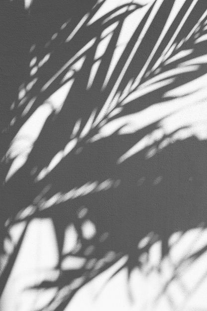 Leaves Shadows