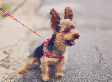 Is social distancing good for your dog?
