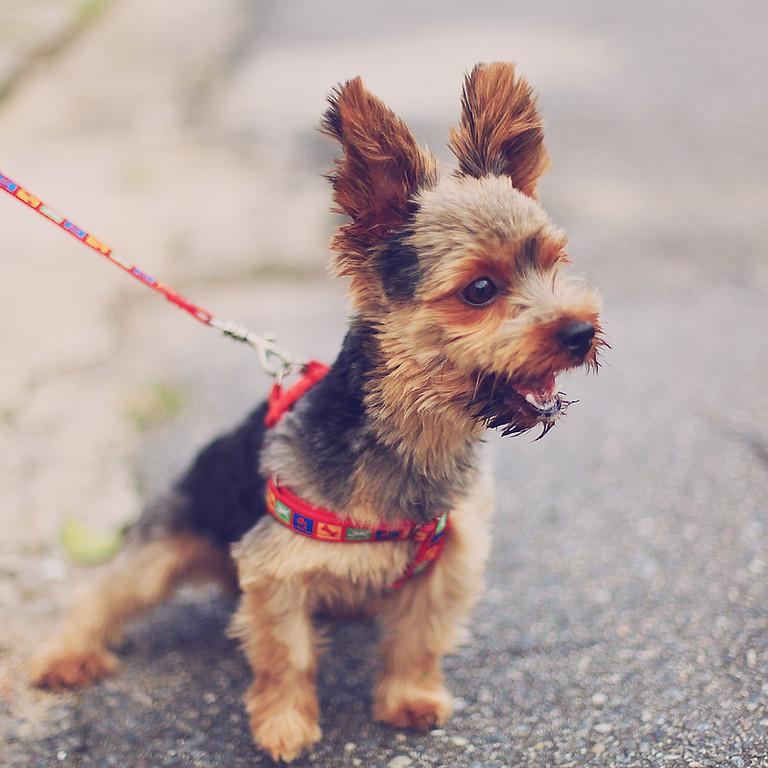 Grundkurs Hundeerziehung