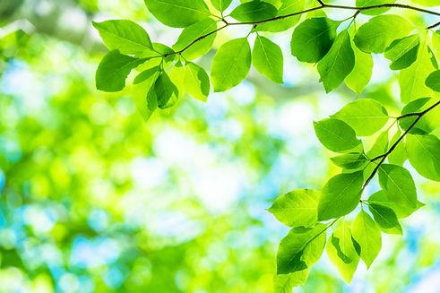 新緑エコイメージ