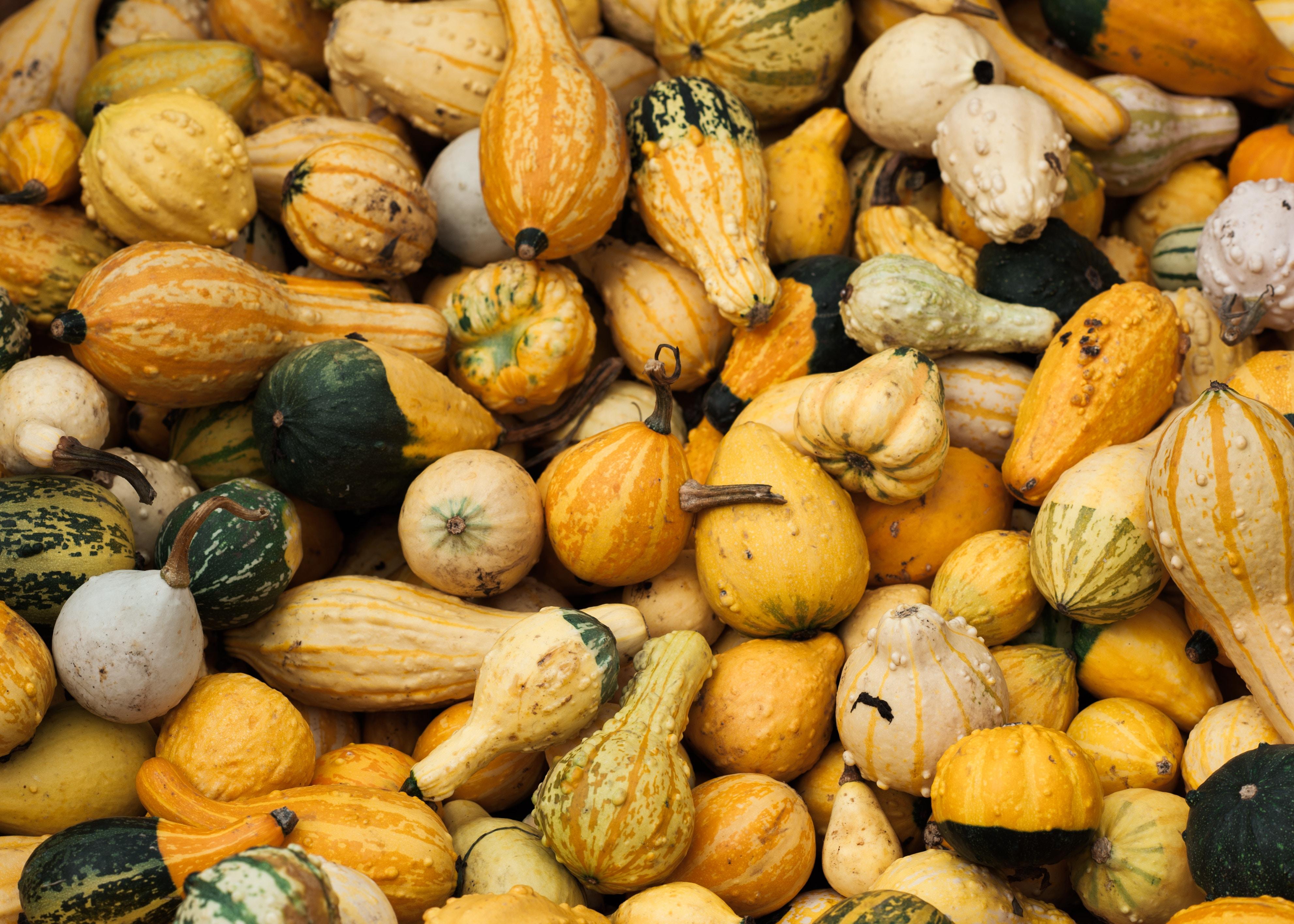 Winter squash - acorn, delicata, butternut