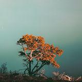 懸崖上的樹