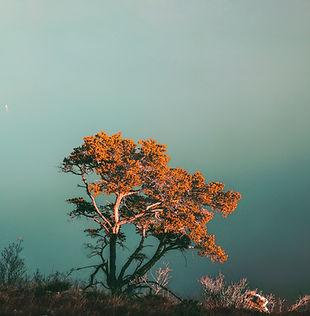 Árvore no penhasco