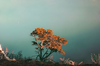 Baum auf einer Klippe