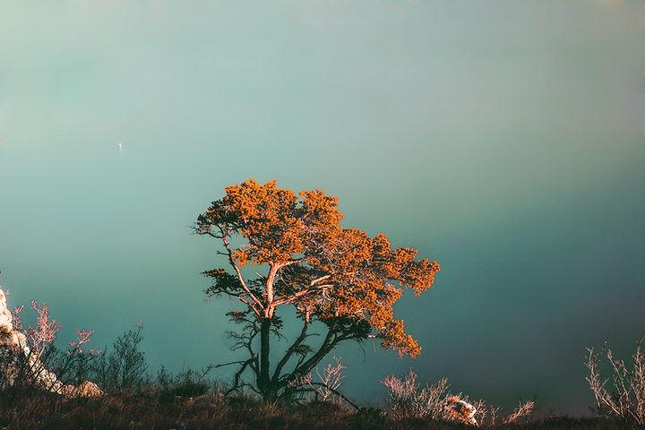 崖の上のツリー