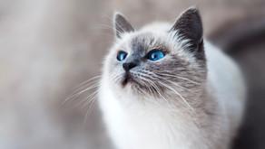 Votre chat est-il normal ?