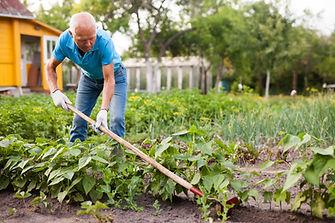 Healthy Food Gardening