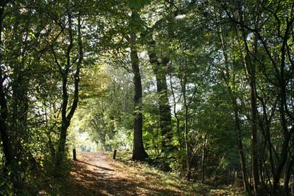 Wanderwege, www.fewo-dewes.com