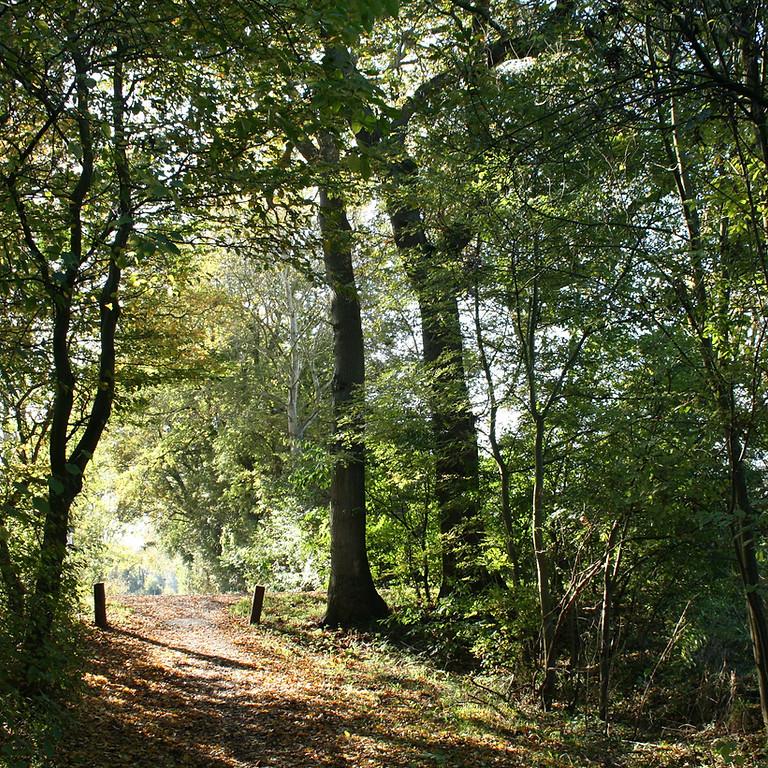 2nd Saturday Trail Walk