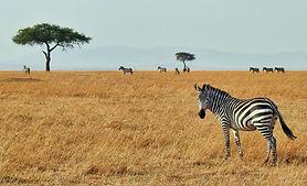 Masai Mara National Reserve Kenya