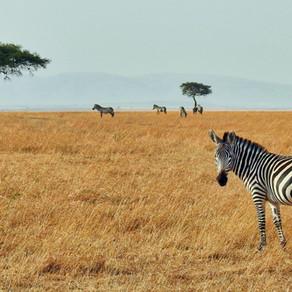 November - Zambia #3