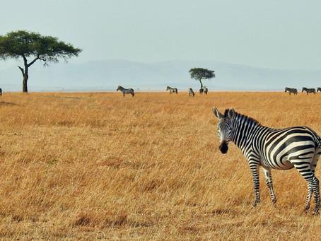 Safari Week - DAY 5, Friday