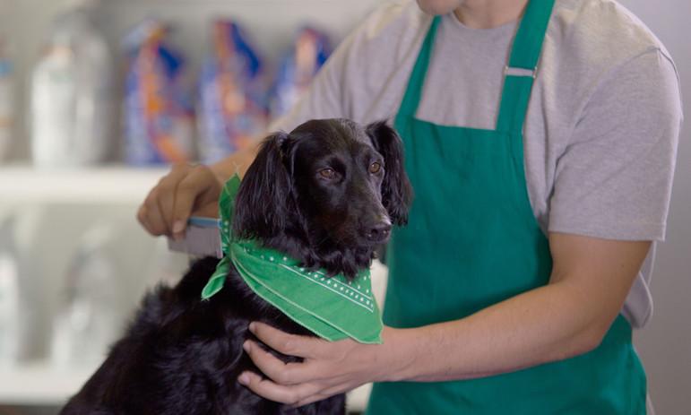 Schattige hond met bandana