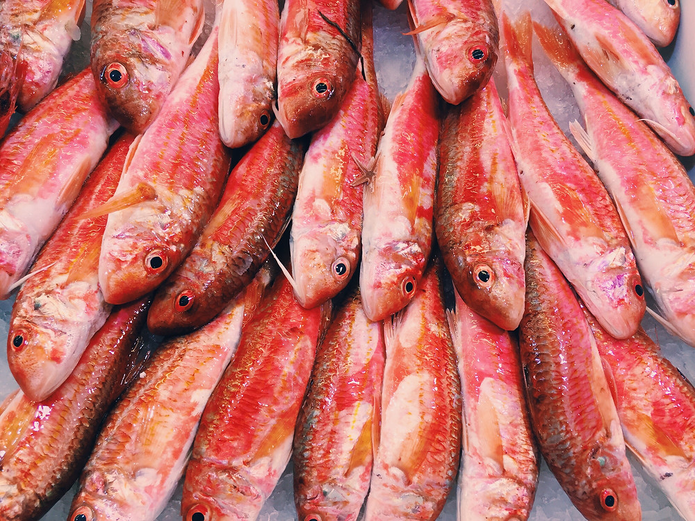 Seafood Cold Chain Monitoring from Tenova Systems