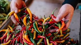 Salsa Macha! 辛いけれど旨味たっぷりなサルサを試してみませんか?+オリジナルメキシカンレシピ紹介