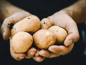 Organiska potatisar