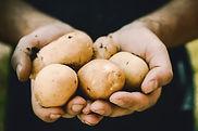 Pommes de terre biologiques