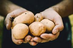 Batatas orgânicas