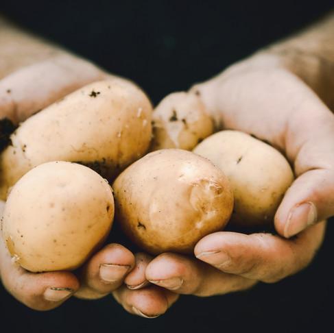Jei gydotės priklausomybę nuo bulvių, turime jums pasiūlymą