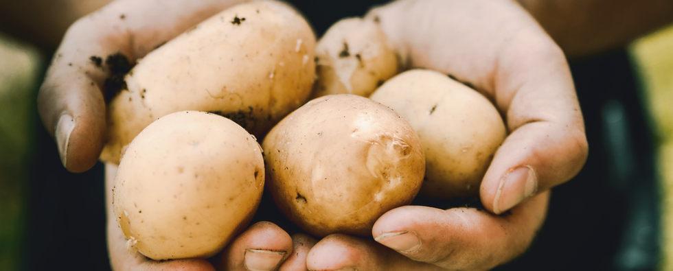 nos pommes de terre