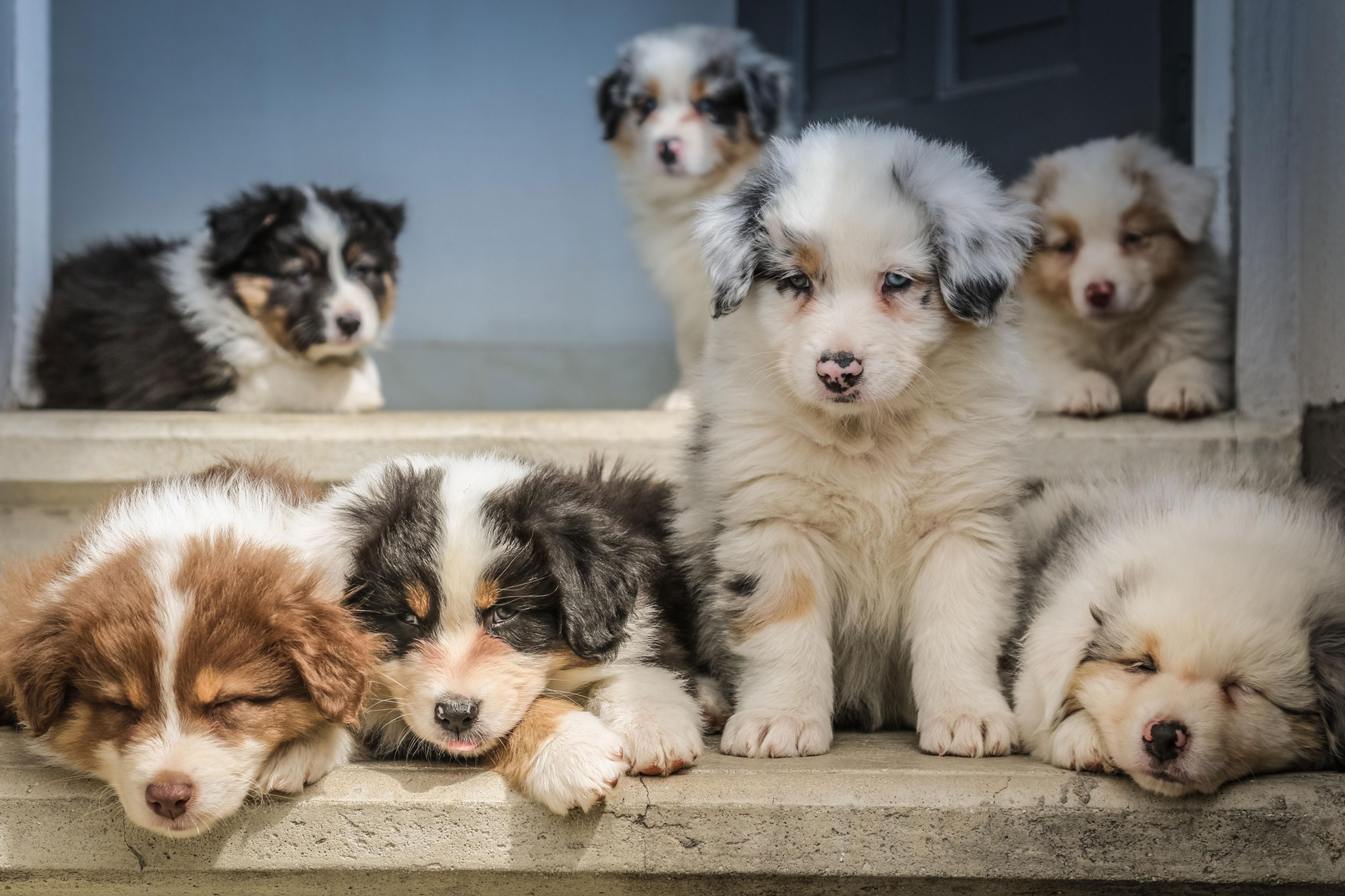 Puppy Socialising Classes