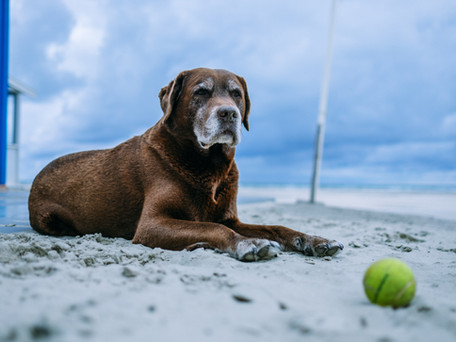 Helping Someone Mourn the Passing of a Beloved Pet