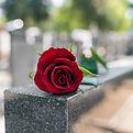 Erinnerungsrote Rose